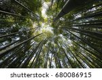 bamboo forest dam yang korea | Shutterstock . vector #680086915
