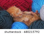 new born baby cat sleeping.... | Shutterstock . vector #680215792
