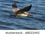 a pelican bird in flight... | Shutterstock . vector #68022442