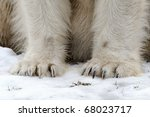Polar bear claws - stock photo