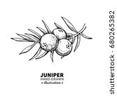 juniper vector drawing.... | Shutterstock .eps vector #680265382