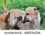 dog bites | Shutterstock . vector #680336206