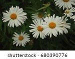 daisy flowers  | Shutterstock . vector #680390776