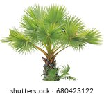 young betel palm on isolate...   Shutterstock . vector #680423122