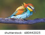 incredibly beautiful bird on a... | Shutterstock . vector #680442025