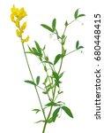 Lathyrus Pratansis Flower...