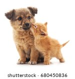 puppy and kitten isolated on... | Shutterstock . vector #680450836