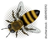 detailed drawing of bee with... | Shutterstock .eps vector #680490592