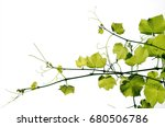 the texture of a young grape... | Shutterstock . vector #680506786