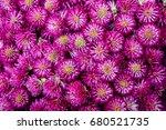 clover flower | Shutterstock . vector #680521735