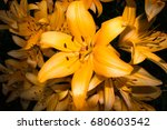 the blossoming orange lily... | Shutterstock . vector #680603542
