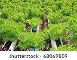 vegetables hydroponics farm - stock photo