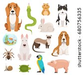 Stock vector big vector set of different domestic animals cats dogs hamster and other pets in cartoon style 680756335