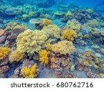 Yellow Corals In Tropical...