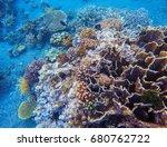 Coral Closeup In Tropical...