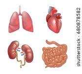 realistic human organs set...   Shutterstock .eps vector #680878582