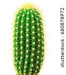 Isolated Cactus On White...
