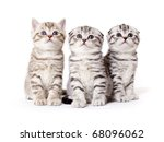 Stock photo three kitties peer into top 68096062