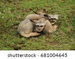 bat eared fox in serengeti | Shutterstock . vector #681004645