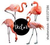 vector pink flamingo... | Shutterstock .eps vector #681157186