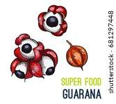 guarana. full color super food... | Shutterstock .eps vector #681297448