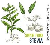 stevia. full color super food... | Shutterstock .eps vector #681297472