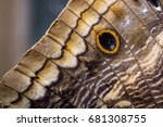 close up of a beautiful own... | Shutterstock . vector #681308755