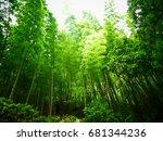 bamboo forest   Shutterstock . vector #681344236