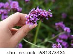 Woman Picking Up Violet Flower...