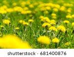 dandelions grass field with... | Shutterstock . vector #681400876