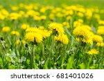 dandelions grass field with... | Shutterstock . vector #681401026