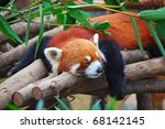 Red Panda  Firefox  Sleeping O...