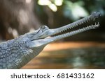 Small photo of Young Gharial