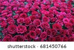 Stock photo natural red roses background 681450766
