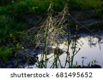 An Unusual Spider's Web In The...
