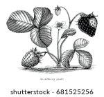 strawberry plant botanical... | Shutterstock .eps vector #681525256
