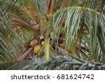 coconut | Shutterstock . vector #681624742