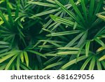 Green Palm Leaves  Tropical...
