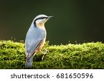 Nuthatch Sitting On A Tree Wit...