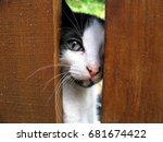Stock photo cute tabby kitten peeking from behind wooden fence looking at the camera 681674422