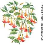 angel's trumpets. brugmansia... | Shutterstock . vector #681715162