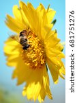 Small photo of Gadfly on a flower