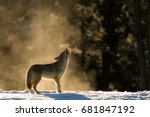 classic coyote howl in the mist. | Shutterstock . vector #681847192