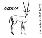 hand drawn sketch of gazelle....