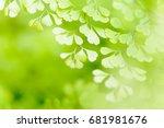 fresh green leaves background   Shutterstock . vector #681981676