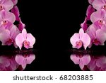 Pink orchid with drop of dew on black background, valentine concept - stock photo
