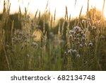 prairie grass and flowers... | Shutterstock . vector #682134748