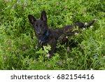 puppy lying in trif lium ... | Shutterstock . vector #682154416
