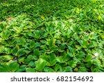 Duckweed   Flower Display   Th...