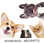 Stock photo puppy and kitten and guinea pig 682194772